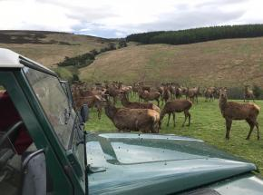 Feeding the Red Deer on a Highland Estate in the Cairngorms!