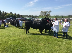 Visit a farm show or Highland Games