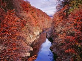 Stunning autumn colours in Killicrankie gorge.