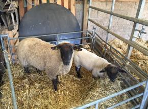 Ewe and her lamb...